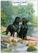 GREETING CARDS,Birthday 6's Black Labradors by the River