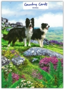 GREETING CARDS,Birthday 6's Border Collies on the Headland