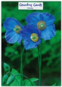 GREETING CARDS,Birthday 6's Blue Poppies