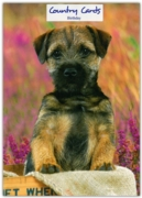 GREETING CARDS,Birthday 6's Border Terrier