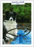 GREETING CARDS,Birthday 6's Border Collie