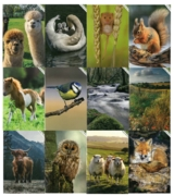 GREETING CARDS, Photographic 72's In The Country, Animals